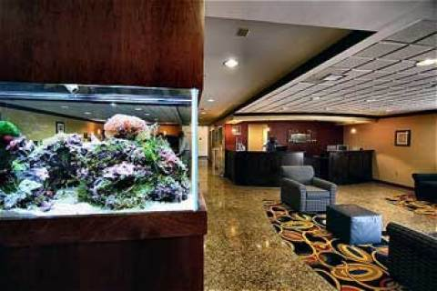 Holiday Inn Express & Suites - Historic Annapo