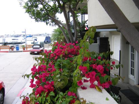 Patio Wall and Apartment Entrance - Balboa Island Vacation Rental