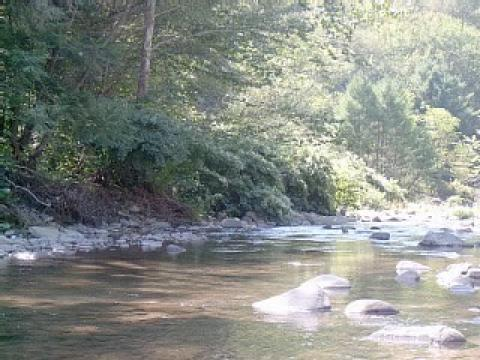 The Stoney Clove Creek in late summer - Catskills Vacation Rentals