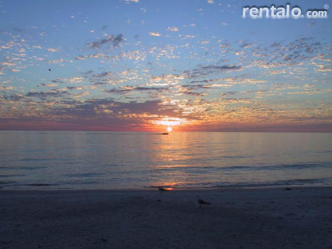 Beach Palms - Vacation Rental in Clearwater Beach