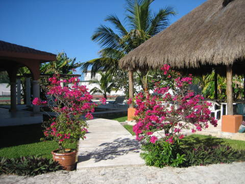 walkway to pool - Cozumel Vacation Villas