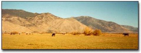 K High Five Rooms, Ranch or Roam Bed and Breakfast - Bed and Breakfast in Gardnerville