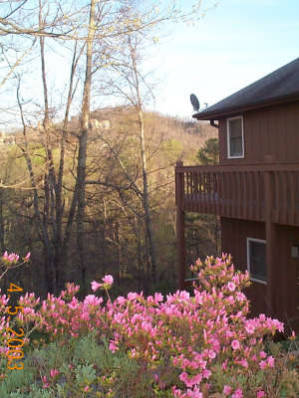 Pretty Place Vacation Rental - Vacation Rental in Pigeon Forge