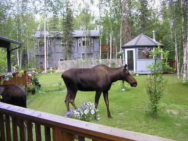 Country Pleasures Bed and Breakfast - Bed and Breakfast in Wasilla